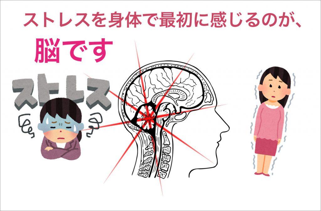 ストレスを最初に感じるのは脳です