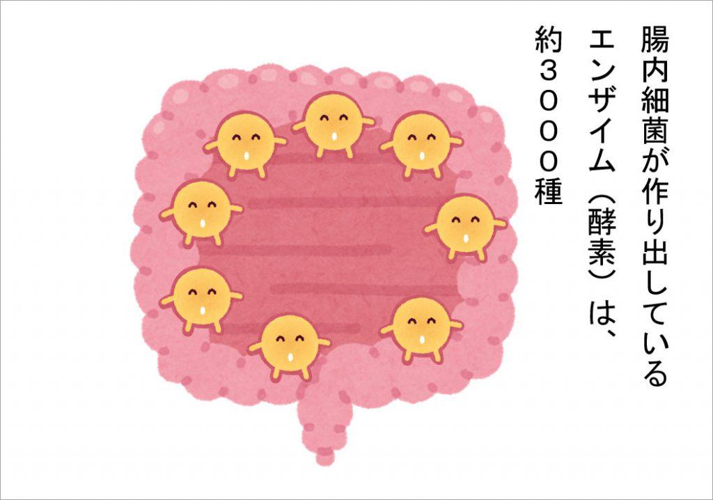 腸内細菌が作り出しているエンザイム(酵素)は、約3000種