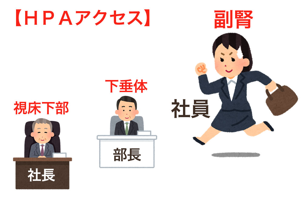 【HPAアクセス】