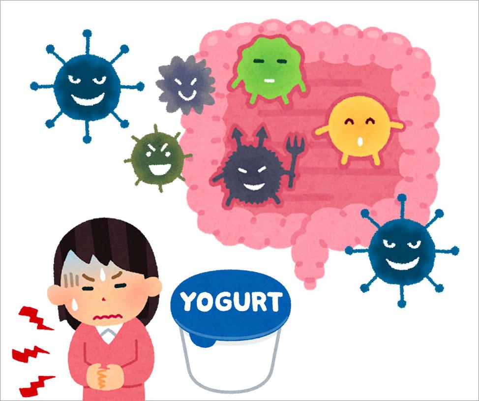 ヨーグルトを常食していると、腸相は悪くなっていきます