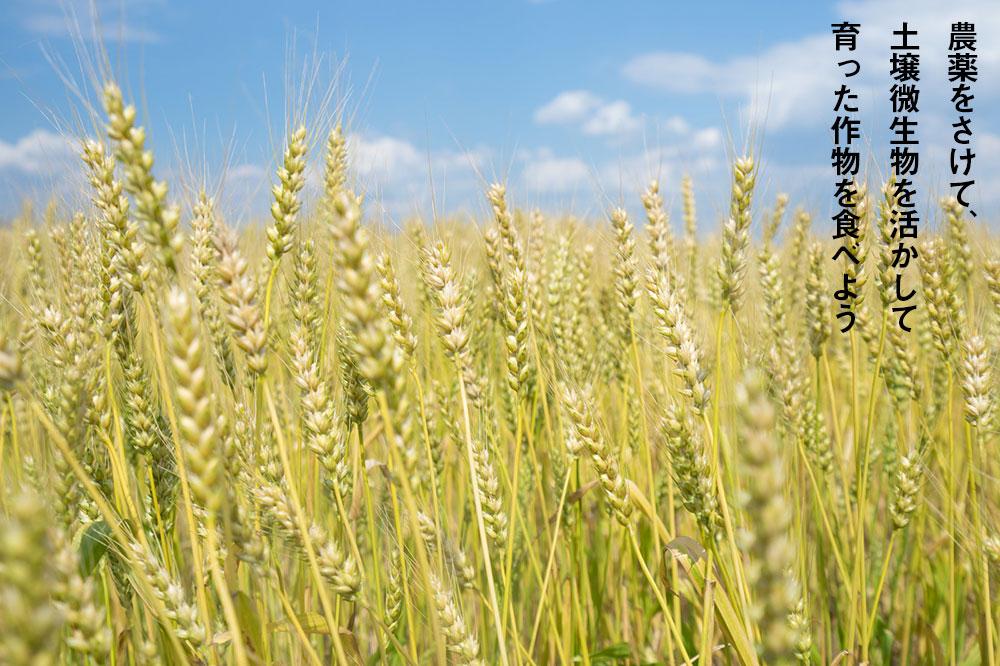 農薬をさけて、土壌微生物を活かして育った作物を食べよう