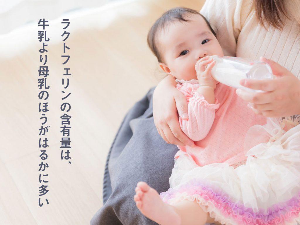 ラクトフェリンの含有量は、牛乳より母乳のほうがはるかに多い
