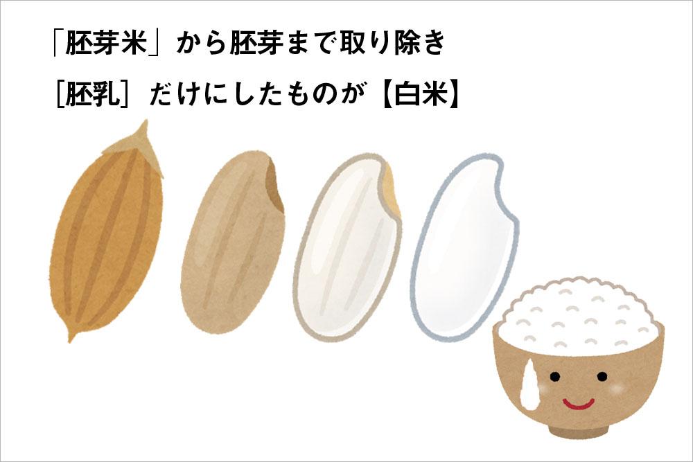 白米は、胚芽を取り除き胚乳だけにしたもの
