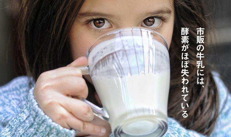 市販の牛乳には、エンザイム(酵素)がほぼ失われている