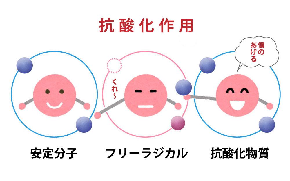 ビタミンCから離れた電子(水素)が、ほかの物質に還元してくれている