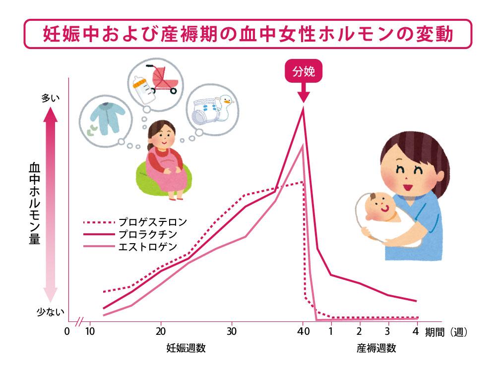 妊娠中および産褥期の血中女性ホルモンの変動