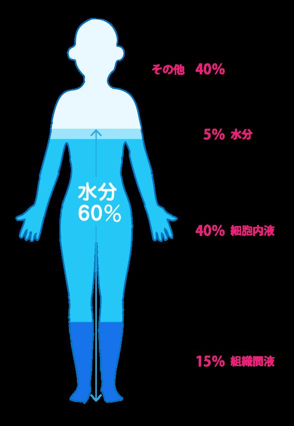 水分をちゃんと摂らないと、体の隅々にまで水分が行き届きません